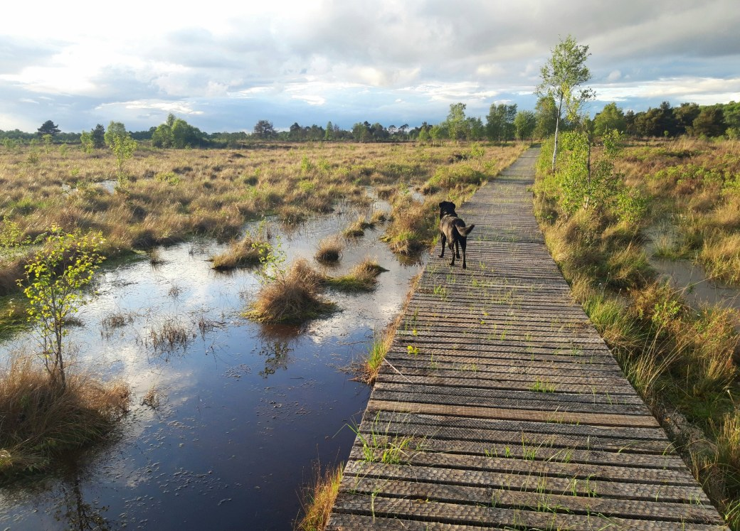 Peatlands Park (1)