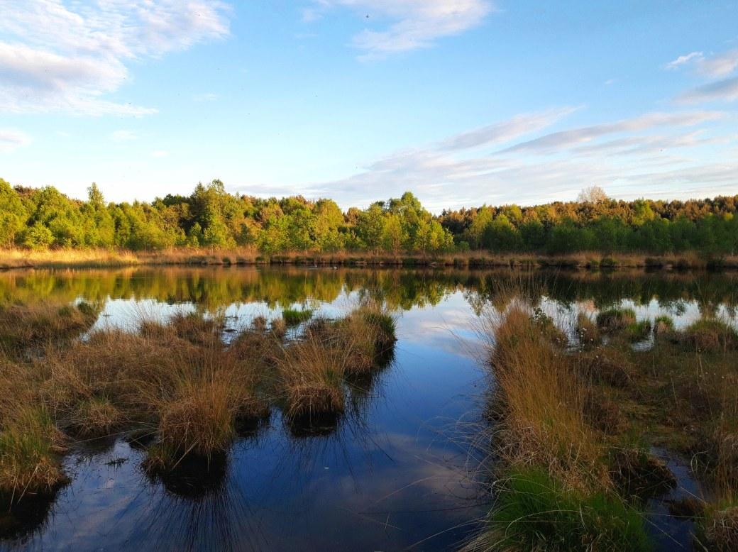 Peatlands Park