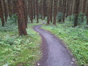 Mountain biking, Gosford Forest Park, County Armagh
