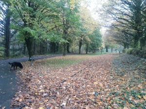 Late autumn at Peatlands Park, County Armagh