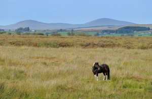 Sperrin Mountains, County Tyrone